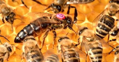 La reine du rucher